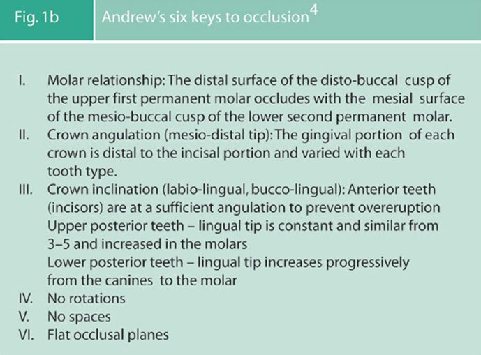 andrews 6 keys to occlusion